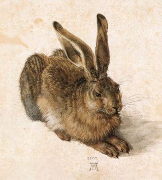 Blog de Ferran Alexandri: El conill de l'Albertina